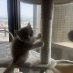 猫の爪とぎに対する効果的な対策を紹介します